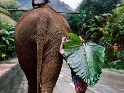 Adventure in Asia with elephant